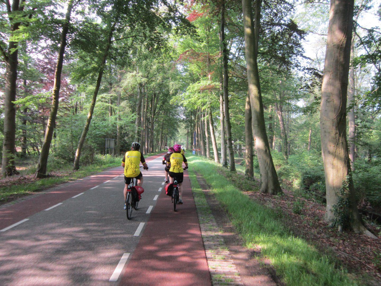trees on path